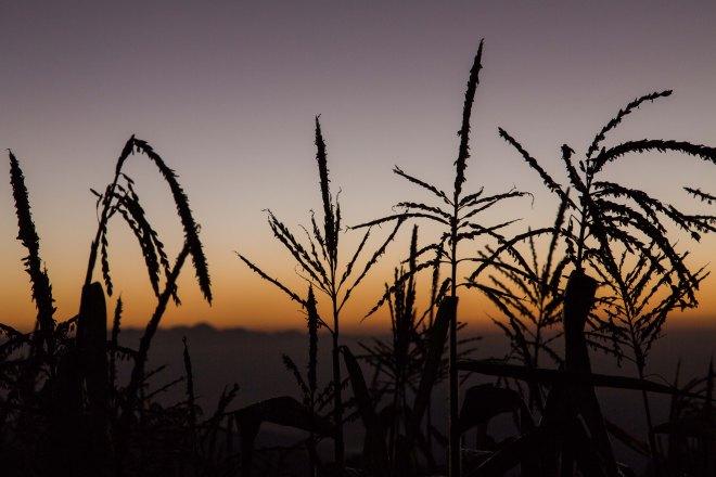 遠くに見えるホンジュラスの山とトウモロコシと朝焼けと